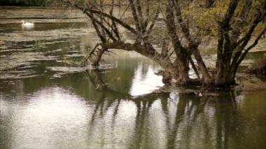 Image 44